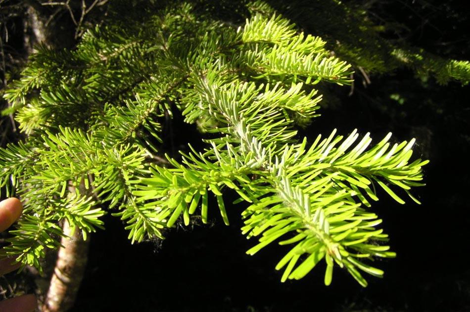 un alto grado de organización, con raíz, tallo y hojas, además de