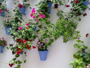 Las mejores plantas para tiestos colgantes