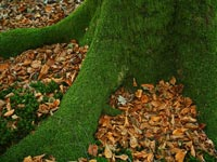 Las plantas no vasculares o Briofitas