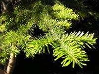 Las plantas vasculares o Cormofitas